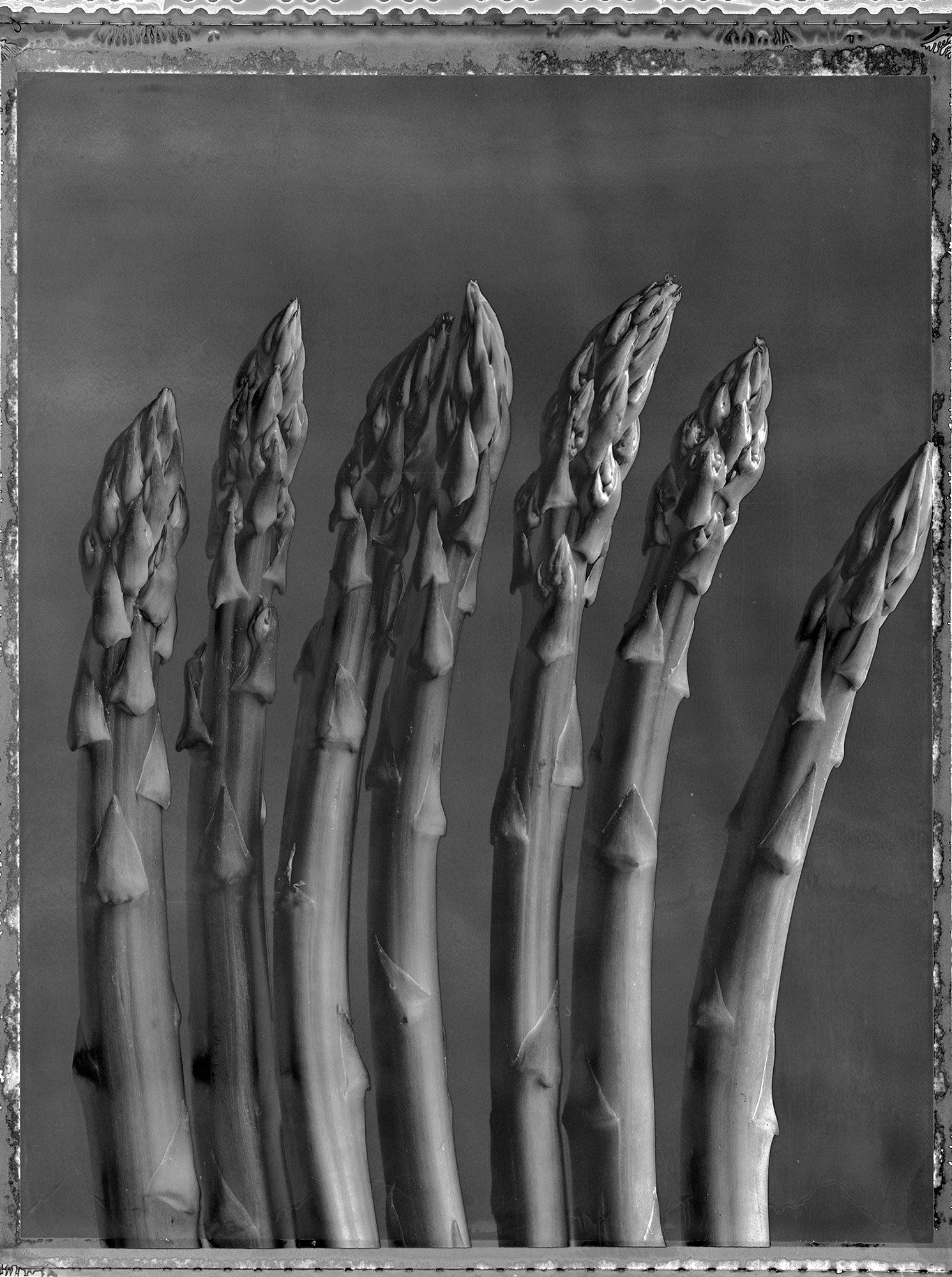 Asparagus2020