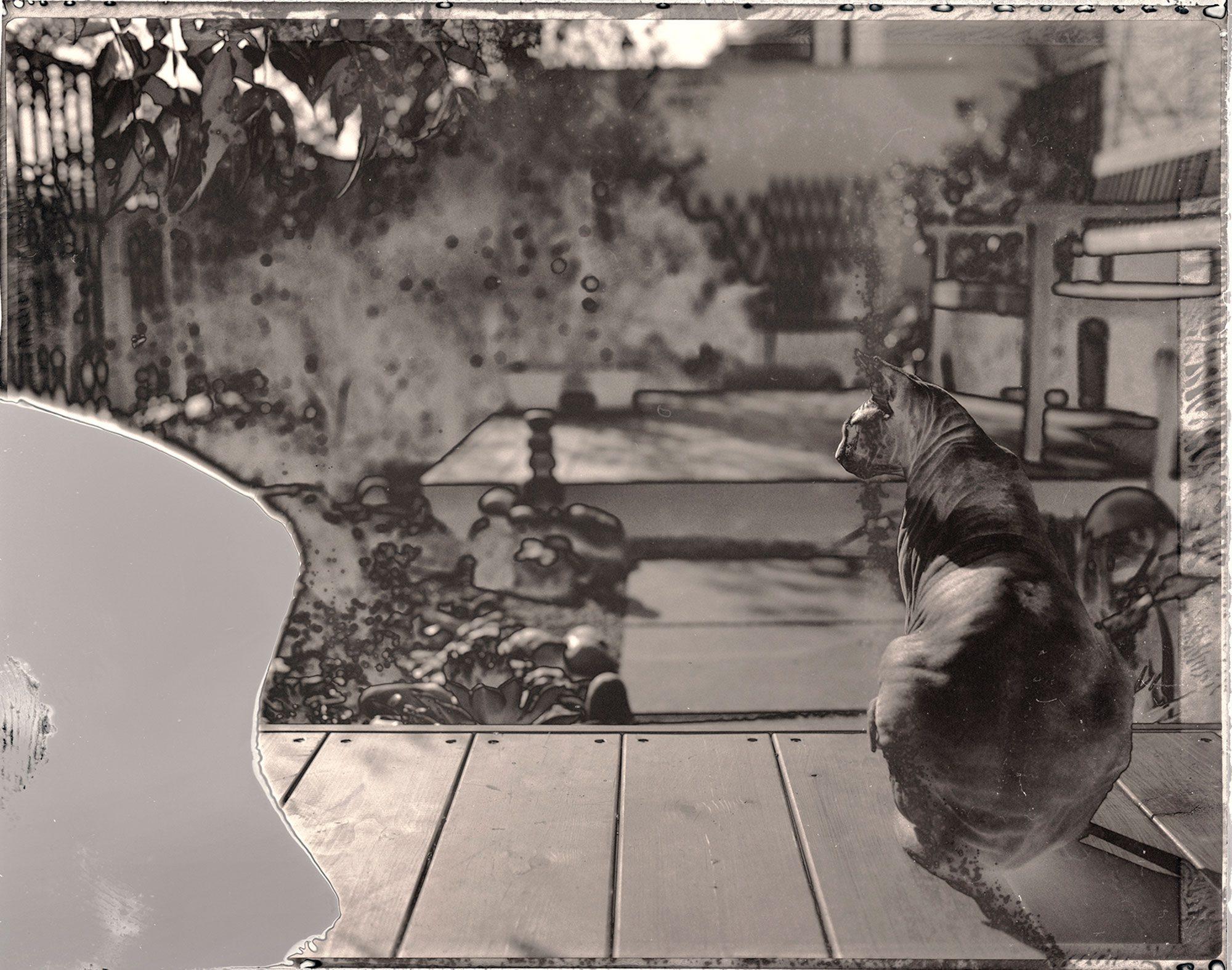 Yoji-back-garden